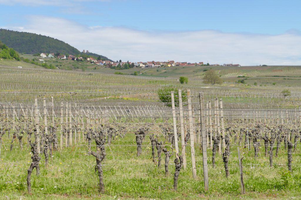 Unterwegs im Elsass, auf der Route du Vin