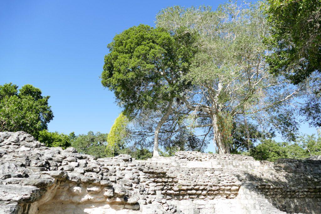 Becan, Baeume nehmen die Ruinen in Besitz