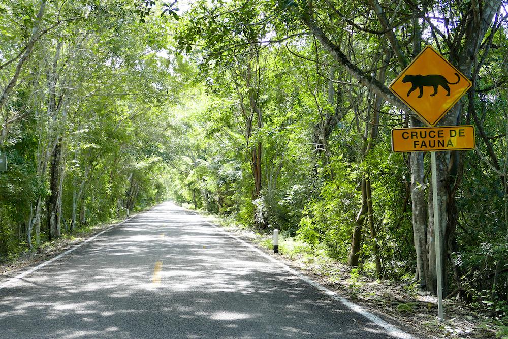 Calakmul, 60 km Anfahrt durch Dschungel