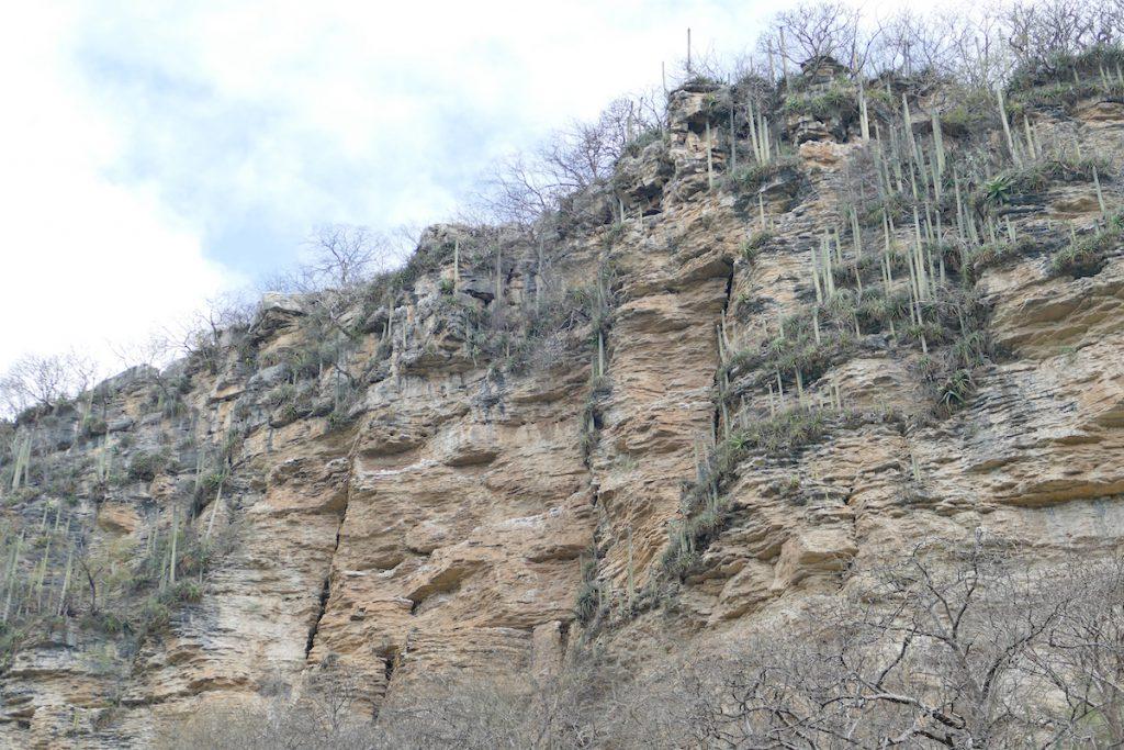 Canyon del Sumidero, beeindruckende Vegetation