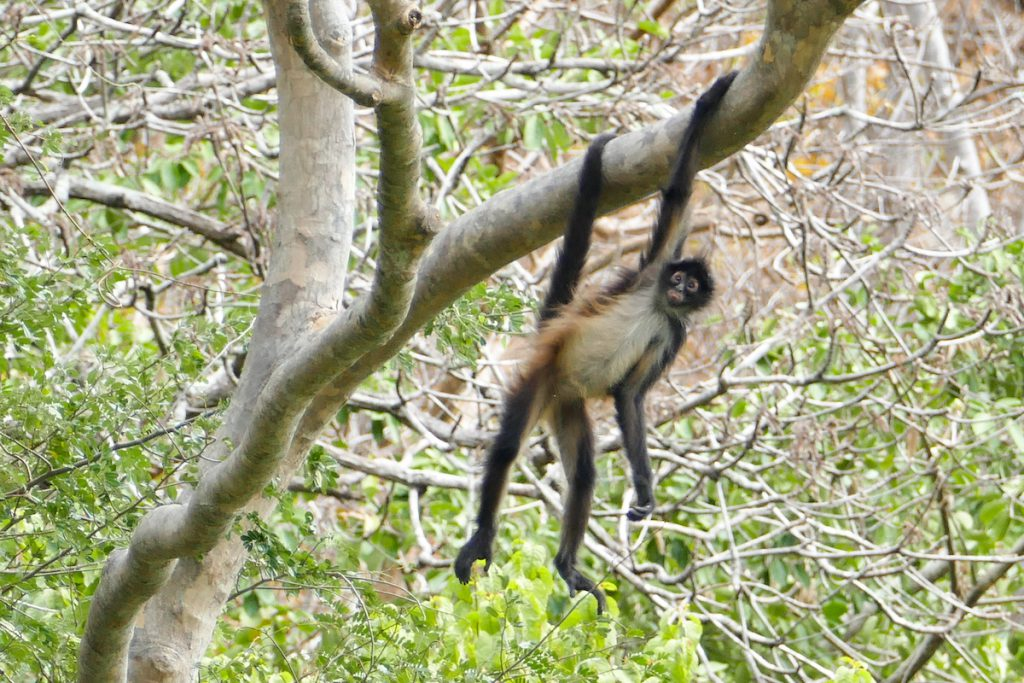 Canyon del Sumidero, wir sehen sogar Affen