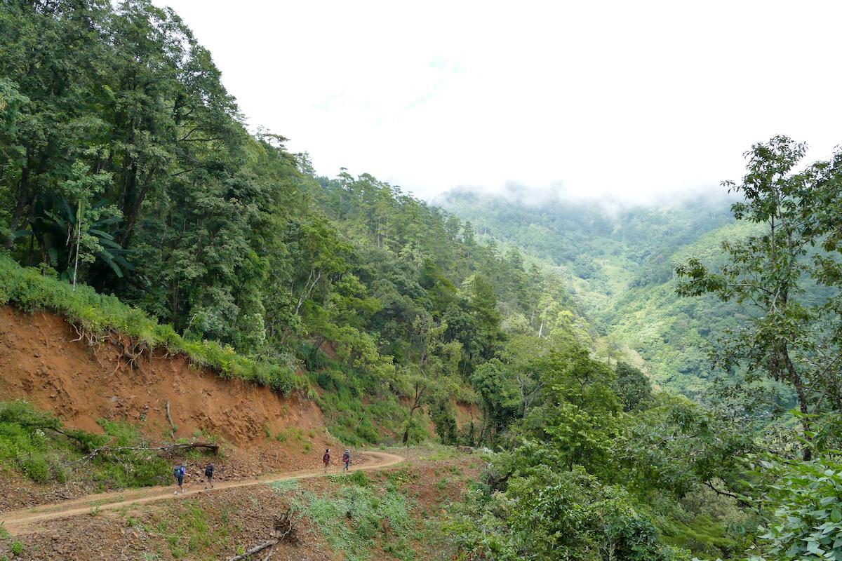 Chin State, Wanderung Tag 2, der Weg fuehrt durch schoene Vegetation
