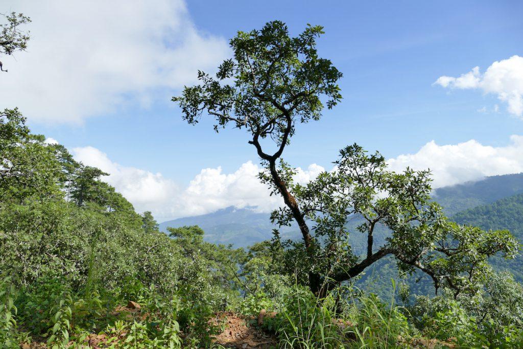 Chin State, Wanderung Tag 2, wir geniessen die Landschaft