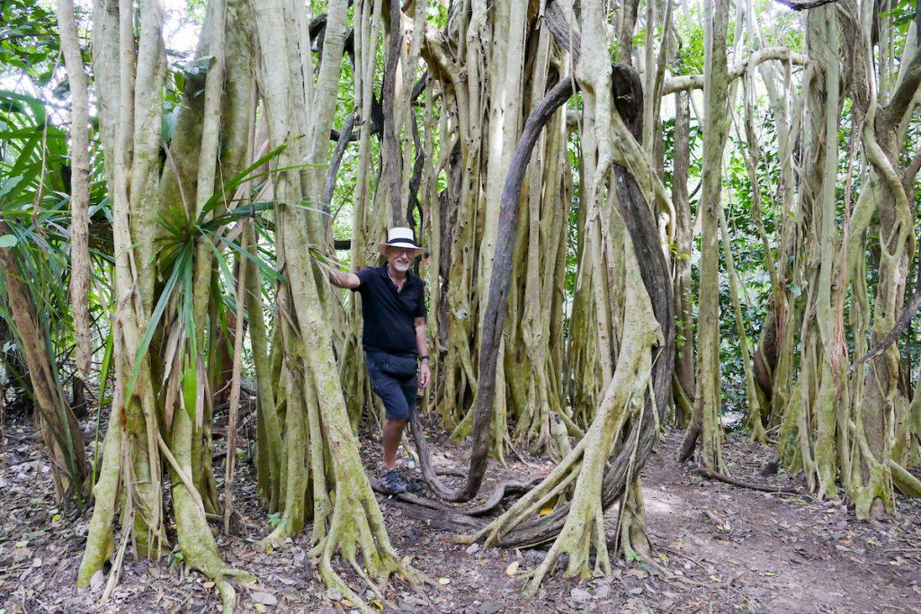 Coba, Dschungel-Feeling