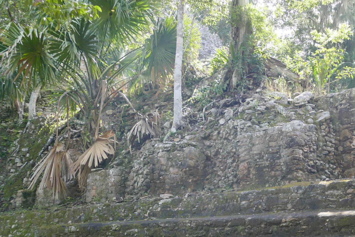 Coba, auch hier dringt der Dschungel staendig weiter vor