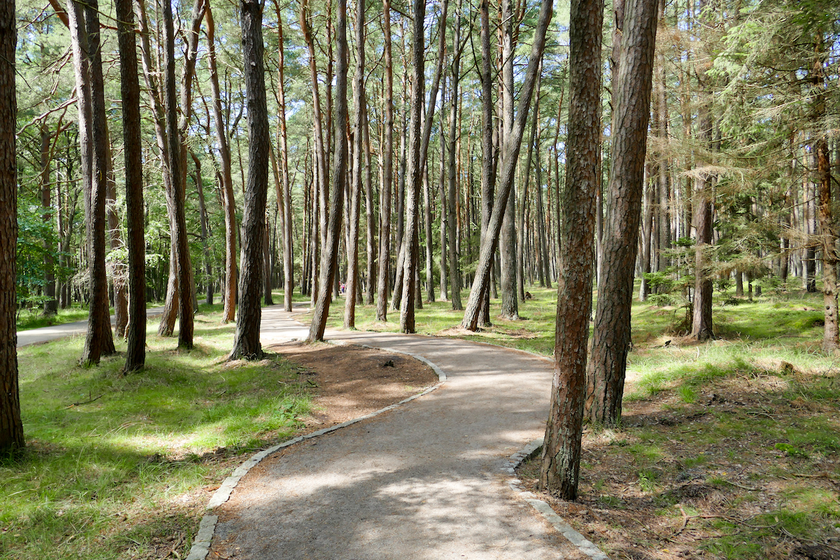 Leba Duene, 5 km durch schoenen Wald zur Duene