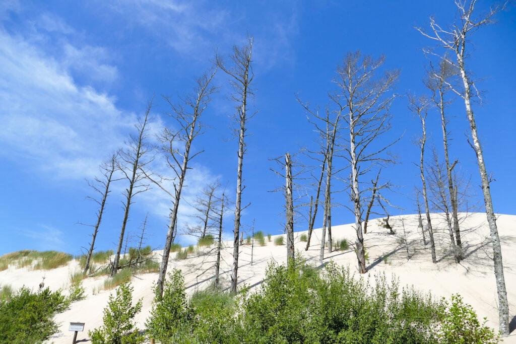 Leba Duene, am Ende des Waldes