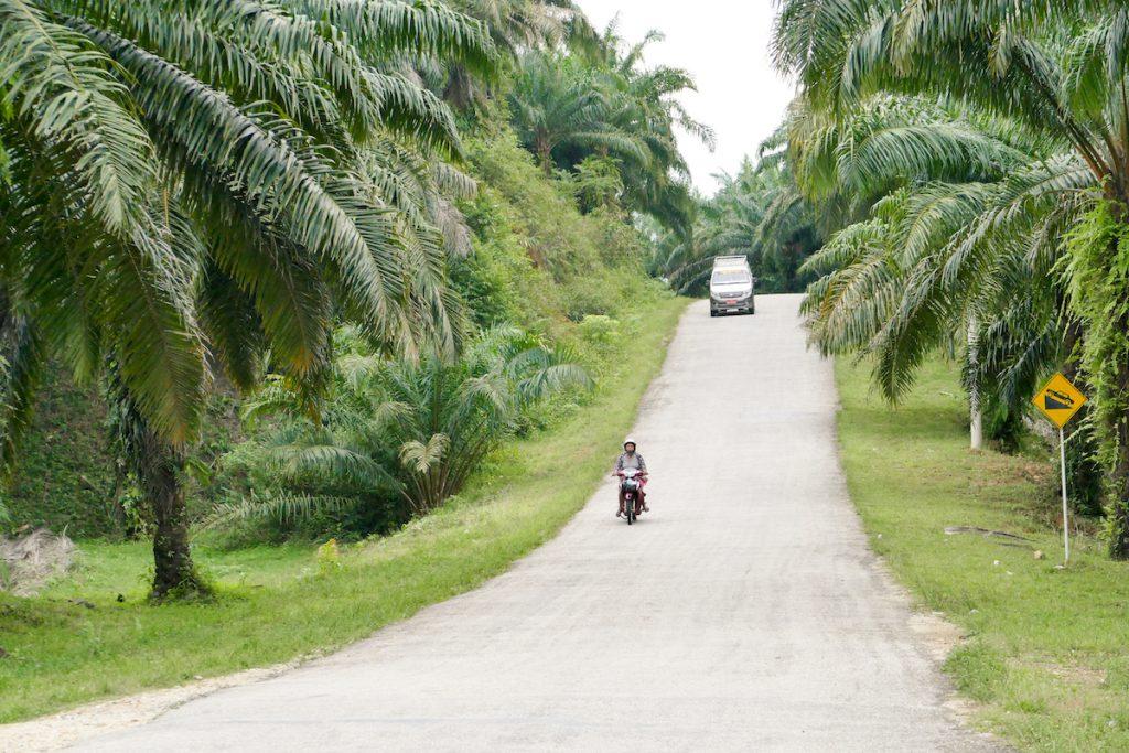 Myanmar, Tanintharyi, endlose Palmenplantagen