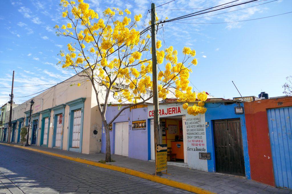 Oaxaca, diese knalligen Farben gefallen uns