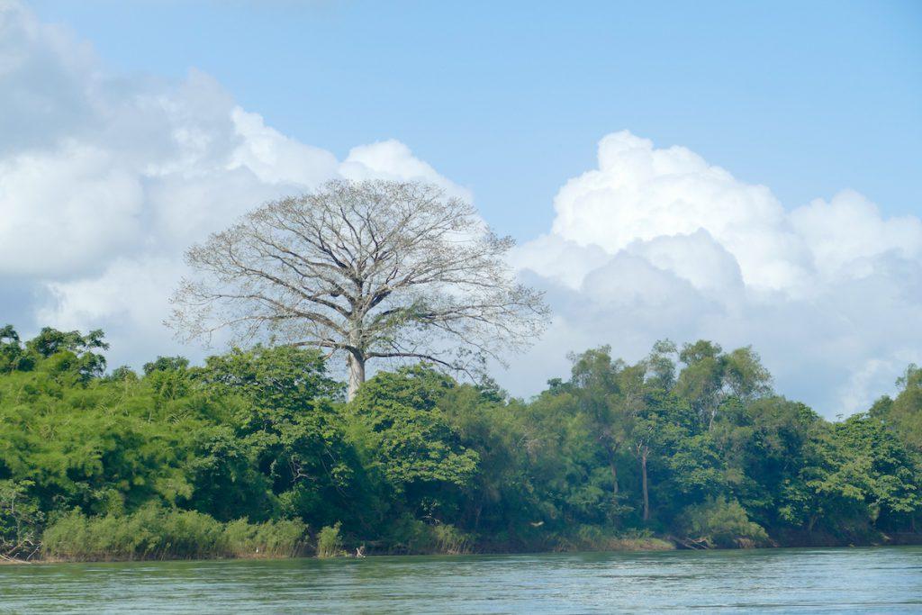 Palenque, Yaxchilan, auf dem Uzumacinta