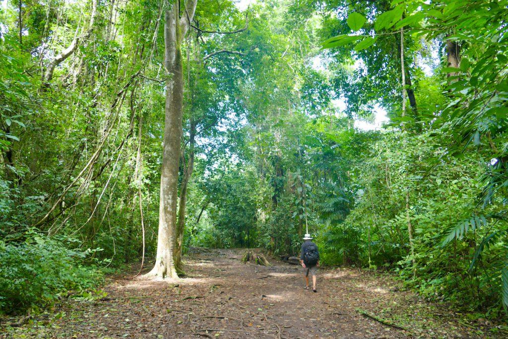 Palenque, Yaxchilan, der Weg fuehrt durch dichten Dschungel zu den Ruinen