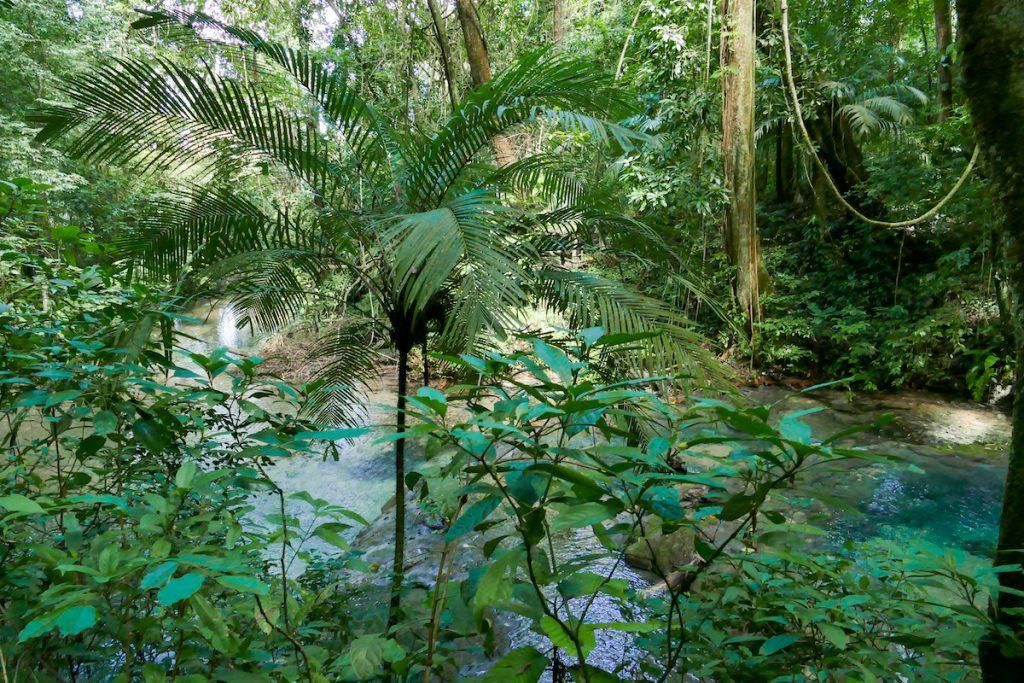 Palenque, wildromantisch ist es hier