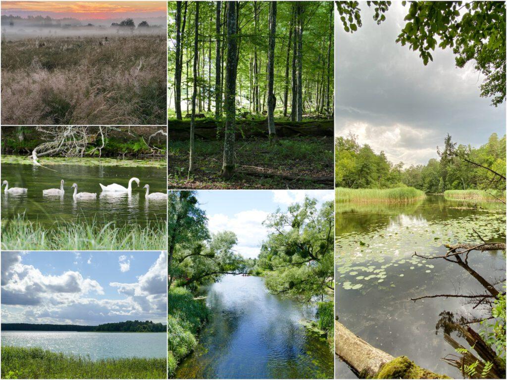 Polen, Natur