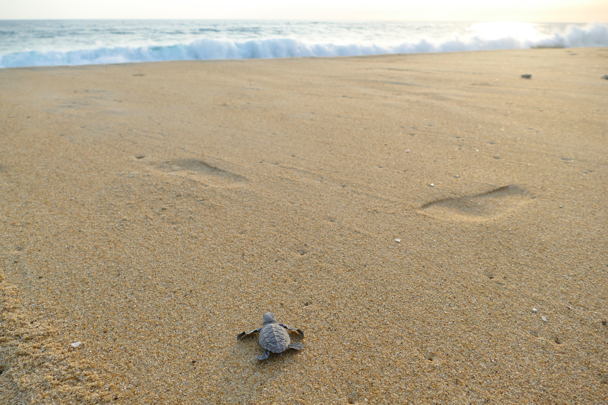 Puerto Escondido, Vive Mar, die erste Huerde Strand wird genommen