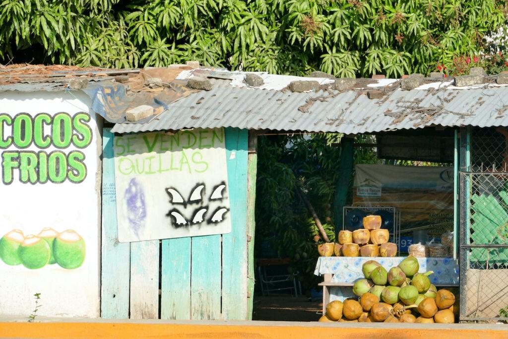 Puerto Escondido, frische, gekuehlte Kokosnuesse, ein Genuss