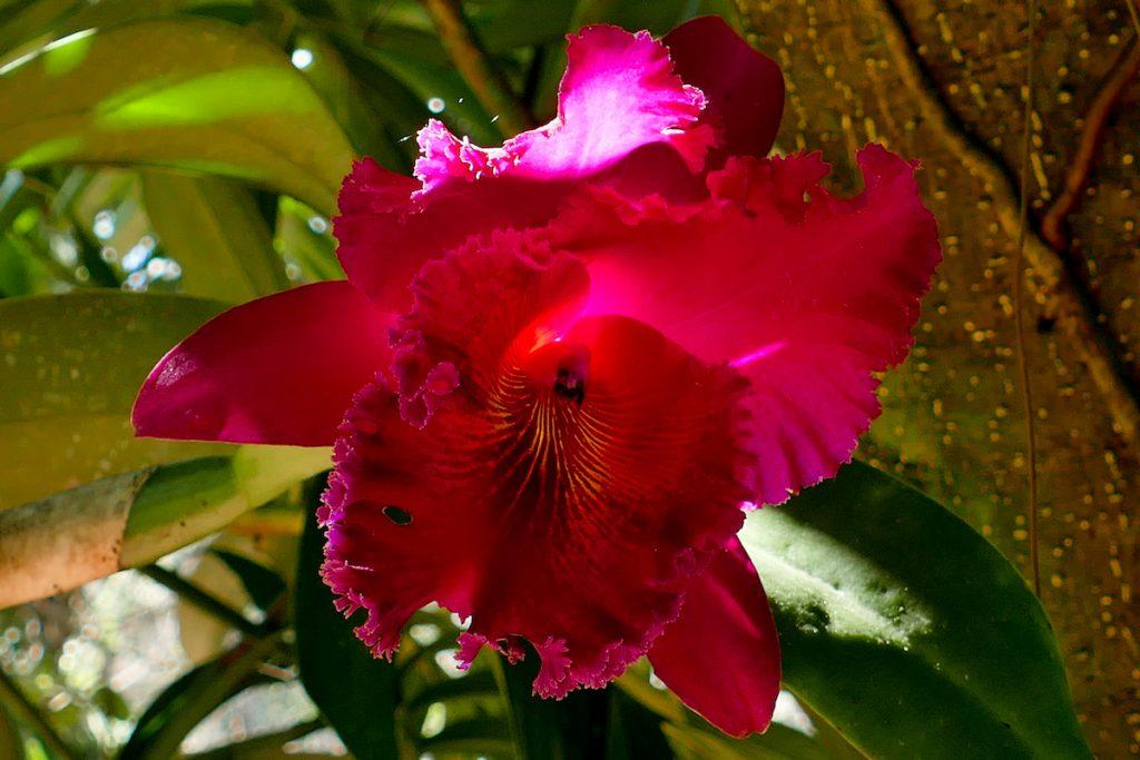 Pyin Oo Lwin, National Kandawgyi Botanical Gardens, Im Orichdeengarten