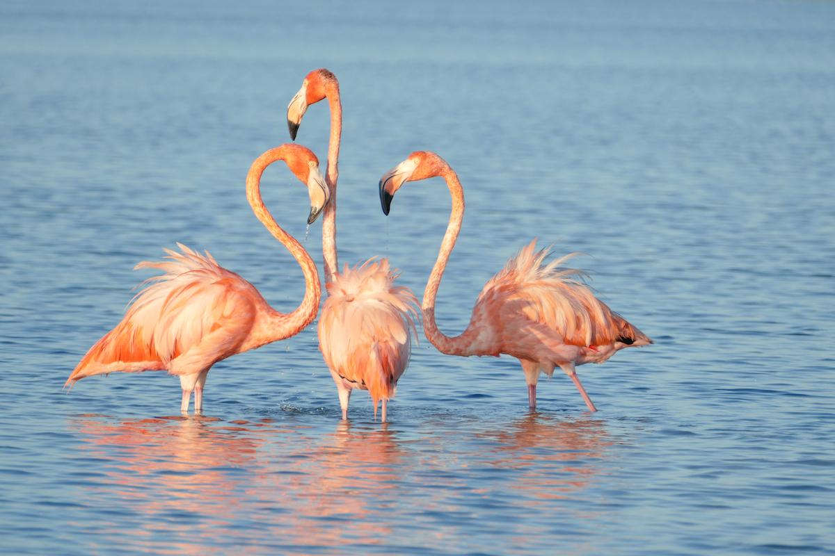 Rio Lagartos, wir sehen zum ersten Mal Flamingos in der Natur