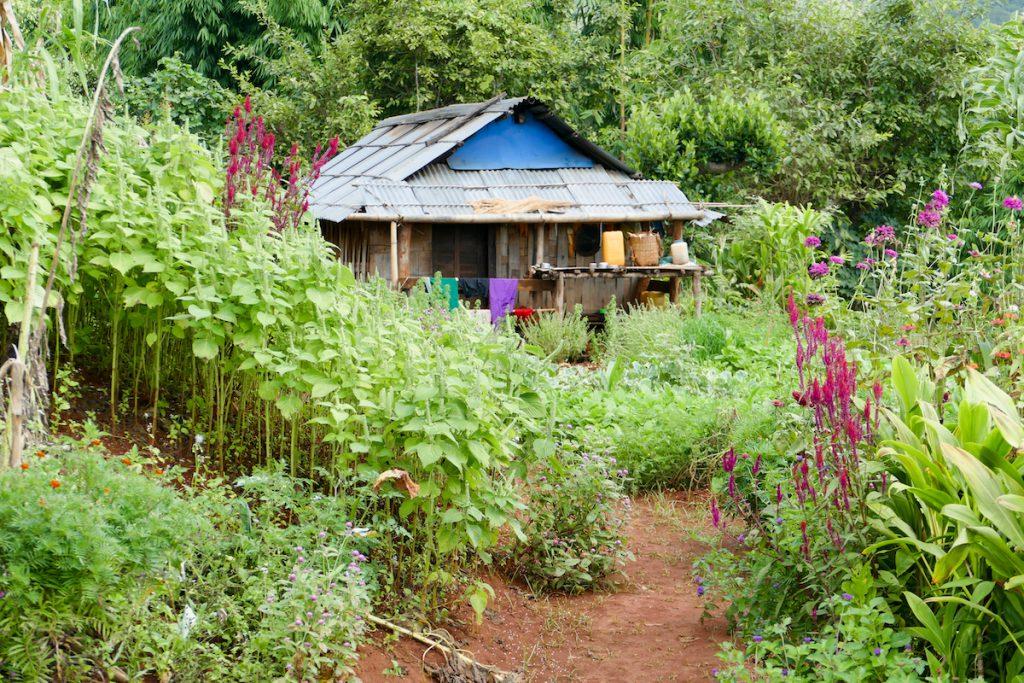 Shan State, Man Loi, Gemuese und Blumen werden direkt im Dorf angepflanzt