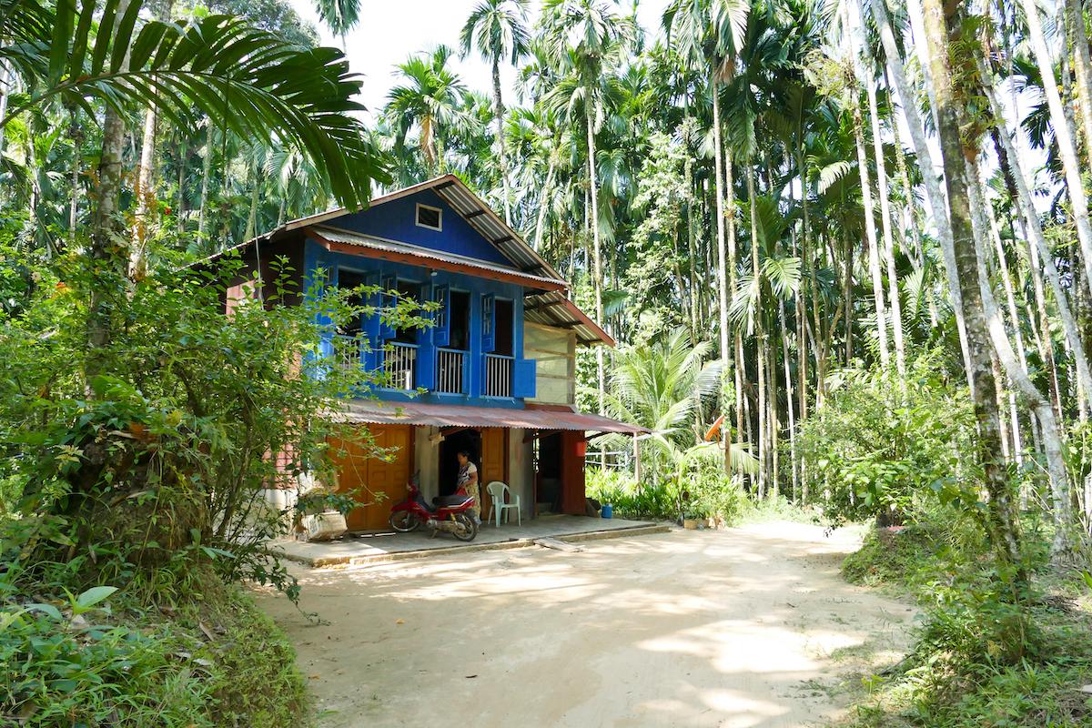 Tanintharyi, ein Haus inmitten von Betelpalmen